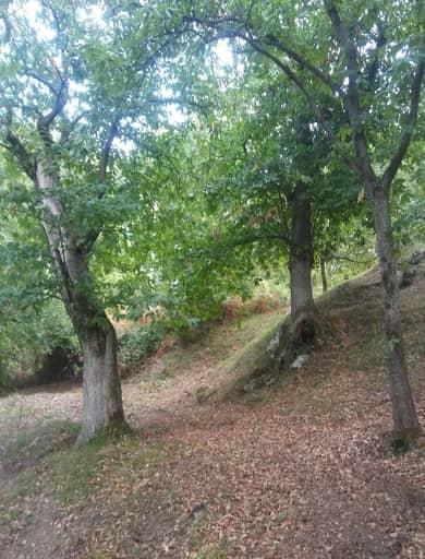 il castagneto è un ecosistema forestale