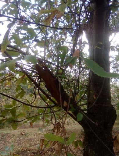 polloni che partono dalla base di un ramo rotto